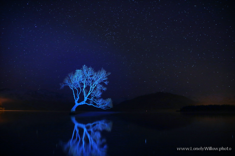20130512wanaka_lonelywillow007
